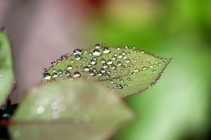 dew on leaf