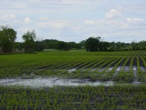 water overflow on farm field
